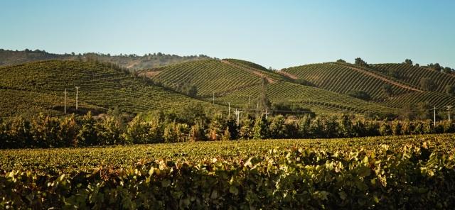The high hills of Kingston Family Vineyards