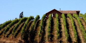 Villa Casa Marín nestled into the hillside vineyards of Lo Abarca
