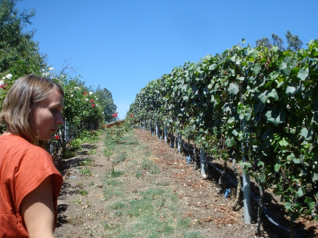 Alejandra Gutiérrez of Loma Larga showing the vines that grow over the bodega.