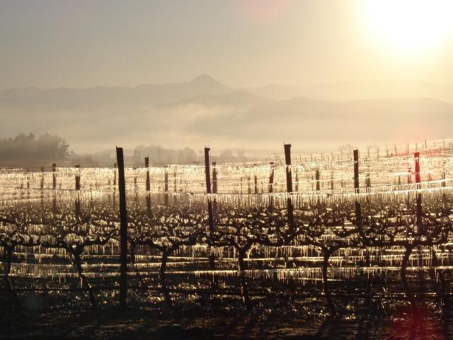 Kingston Family Vineyards-Sun and Mountains