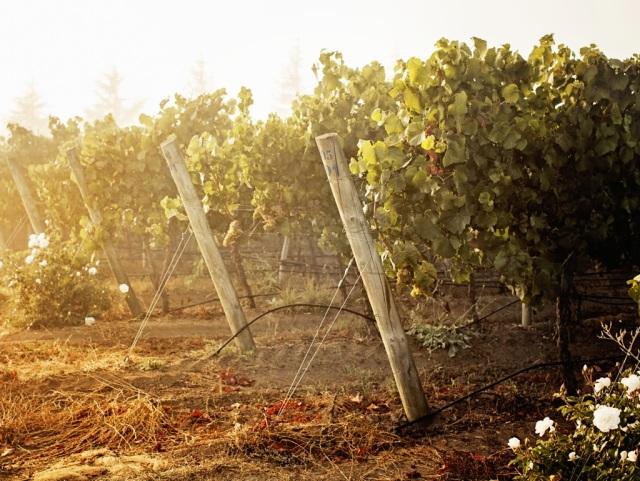 Kingston Family Vineyards-Foggy Vineyards