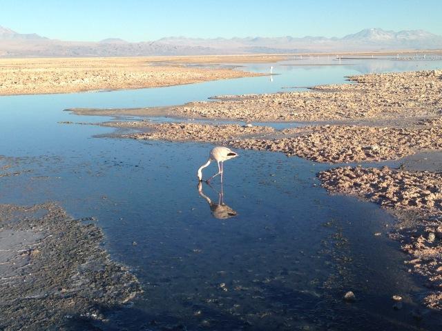 Atacama_The Flamingo Preserve