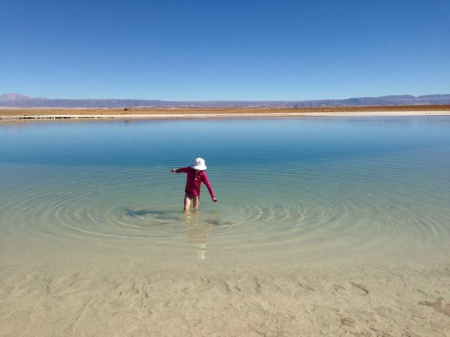 Wading in Laguna Cejar