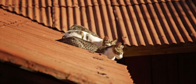 Cats on a hot tin roof in Valparaíso, Chile