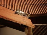 Three cats on a hot tin roof