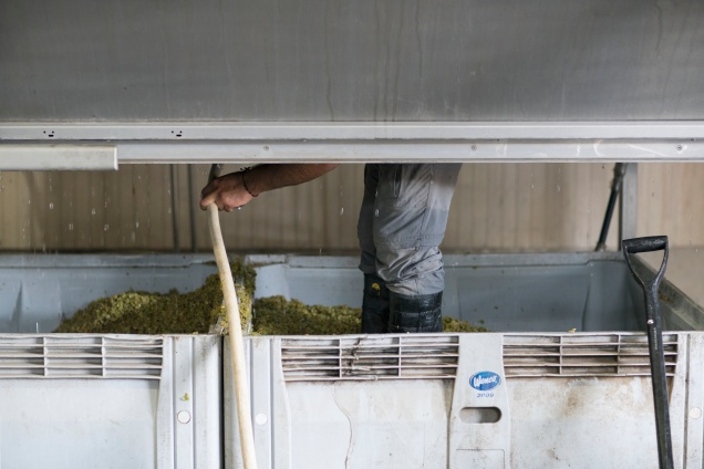 Our cellar master, Manu, inside the press cleaning out the skins from our freshly pressed Sauvignon Blanc